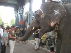 Elefantenkassierer